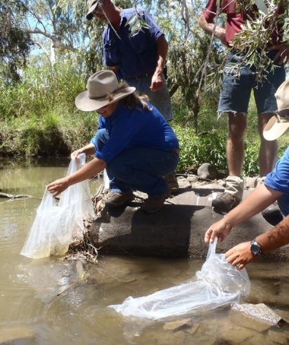 Kerwee staff crouching over Oakey Creek release small fish into the creek